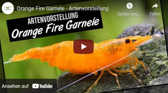 Orange Fire Video