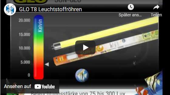 video Leuchtstofföhren