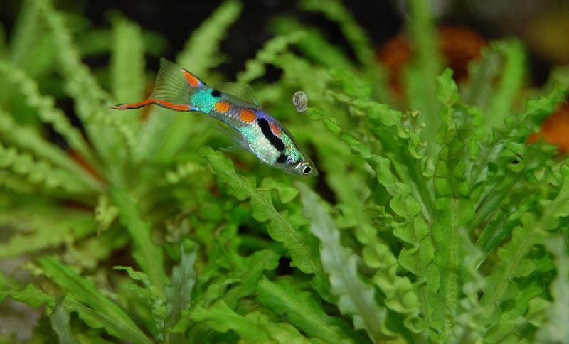 Einlaufzeit Aquarium