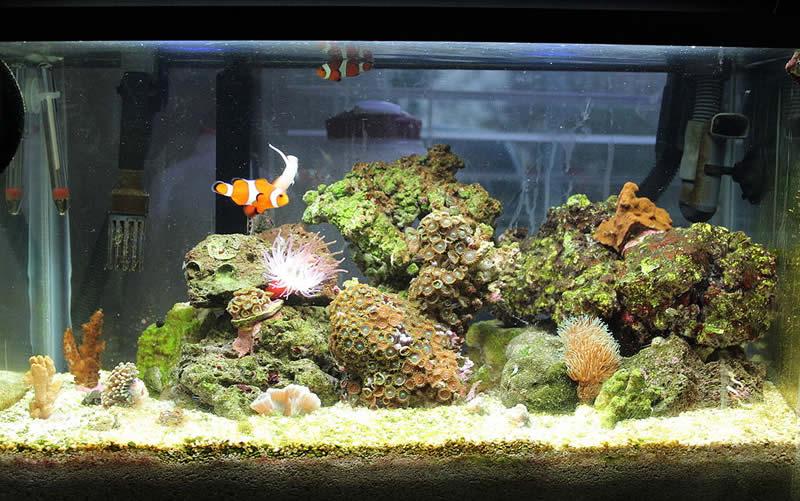 Einrichtung Tipps Nano Aquarium
