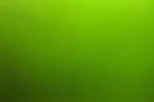 Grünwasser-Aquarienalgen