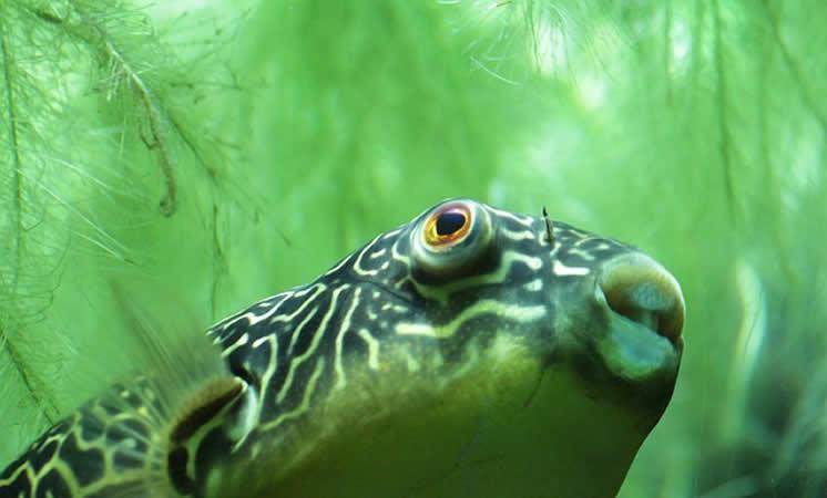 Wie man mit Aquariumalgen umgeht