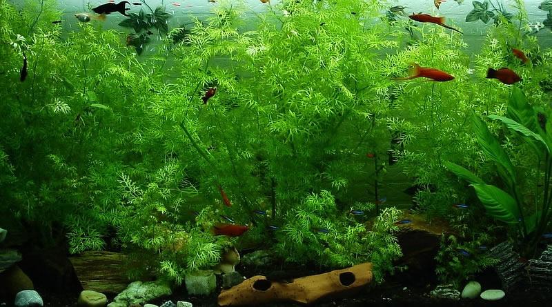 Wie viele Fische in einem Aquarium