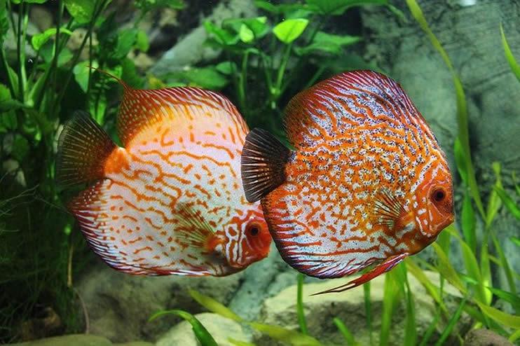 Diagnose von Problemen mit Aquarienpflanzen
