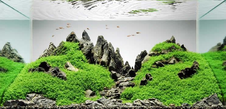 Einstieg in das Aquascaping