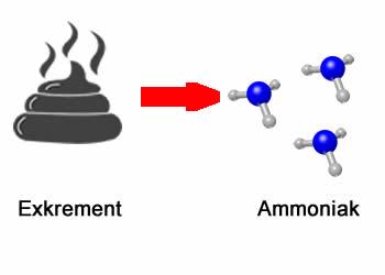 Exkrement wird zu Ammoniak