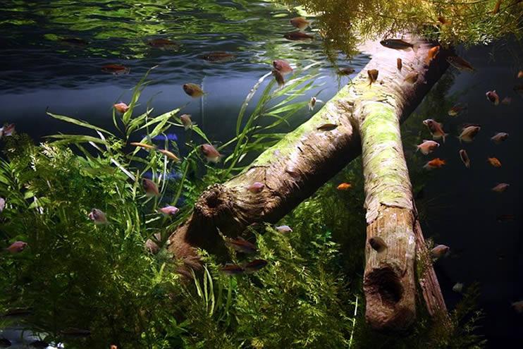 Leitfaden Stickstoffkreislauf Aquarien