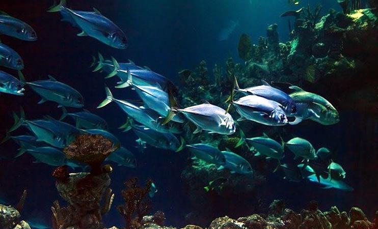 Was macht ein Aquarianer