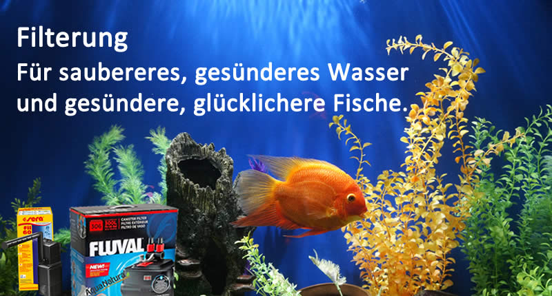 Filterung Für saubereres, gesünderes Wasser und gesündere, glücklichere Fische