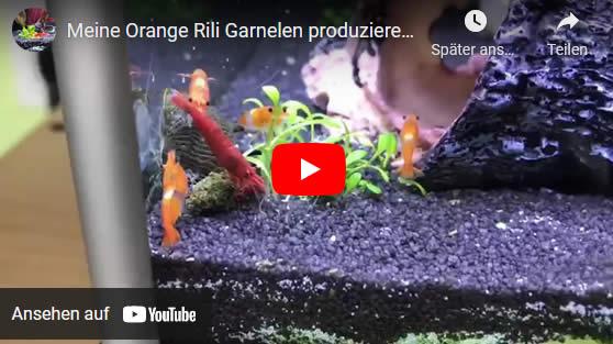 Orange Rili im Video