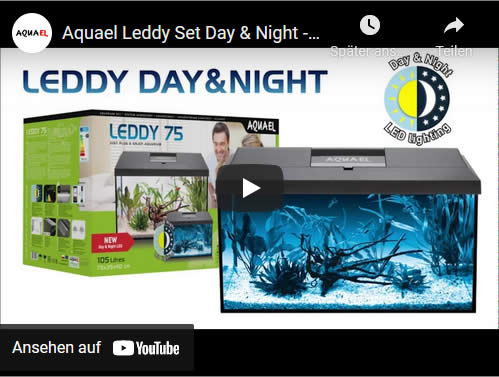 Video LEDDY DAY NIGHT